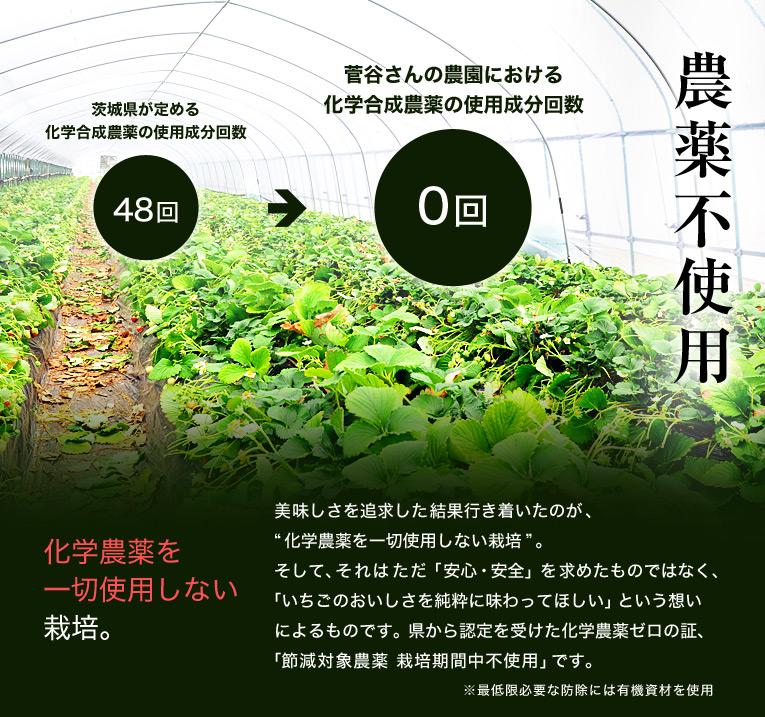 """農薬不使用 化学農薬を一切使用しない栽培。 美味しさを追求した結果行き着いたのが、""""化学農薬を一切使用しない栽培""""。そして、それはただ「安心・安全」を求めたものではなく、「いちごのおいしさを純粋に味わってほしい」という想いによるものです。県から認定を受けた化学農薬ゼロの証、「節減対象農薬 栽培期間中不使用」です。"""
