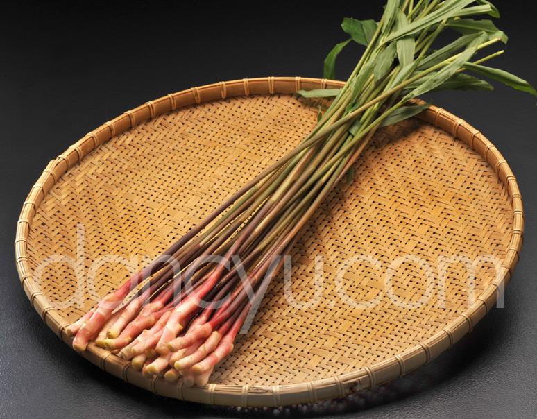 葉つき金時生姜 矢生姜(はじかみ) Lサイズ(30本入り)温室栽培の写真