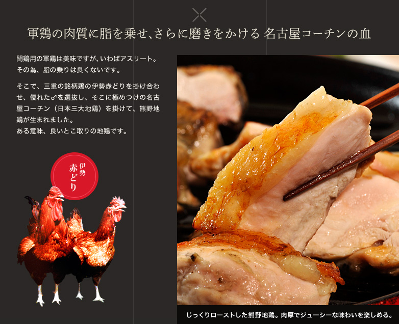 軍鶏の肉質に脂を乗せ、さらに磨きをかける 名古屋コーチンの血  闘鶏用の軍鶏は美味ですが、いわばアスリート。その為、脂の乗りは良くないです。そこで、三重の銘柄鶏の伊勢赤どりを掛け合わせ、優れた♂を選抜し、そこに極めつけの名古屋コーチン(日本三大地鶏)を掛けて、熊野地鶏が生まれました。 ある意味、良いとこ取りの地鶏です。