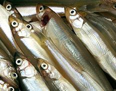 魚三がお届けする琵琶湖の食文化