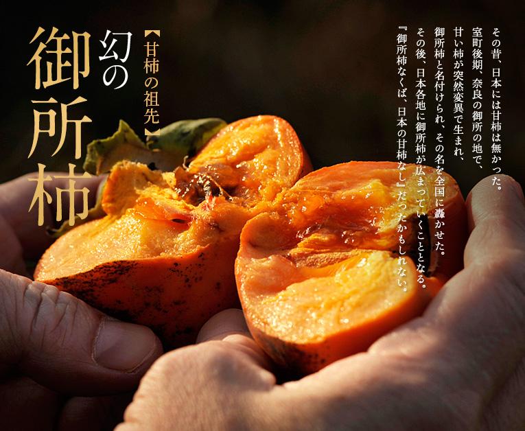 甘柿の祖先 幻の御所柿 その昔、日本には甘柿は無かった。 室町後期、奈良の御所の地で、 甘い柿が突然変異で生まれ、 御所柿と名付けられ、その名を全国に轟かせた。 その後、日本各地に御所柿が広まっていくこととなる。 『御所柿なくば、日本の甘柿なし』だったかもしれない。