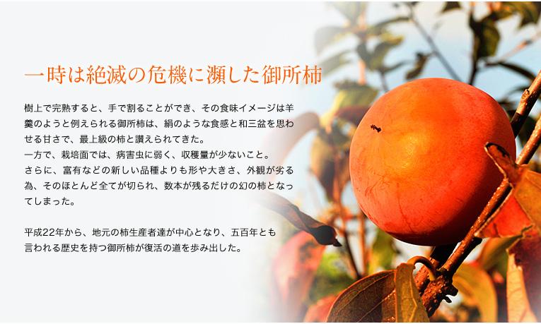 一時は絶滅の危機に瀕した御所柿 樹上で完熟すると、手で割ることができ、その食味イメージは羊羹のようと例えられる御所柿は、絹のような食感と和三盆を思わせる甘さで、最上級の柿と讃えられてきた。 一方で、栽培面では、病害虫に弱く、収穫量が少ないこと。 さらに、富有などの新しい品種よりも形や大きさ、外観が劣る為、そのほとんど全てが切られ、数本が残るだけの幻の柿となってしまった。  平成22年から、地元の柿生産者達が中心となり、五百年とも 言われる歴史を持つ御所柿が復活の道を歩み出した。