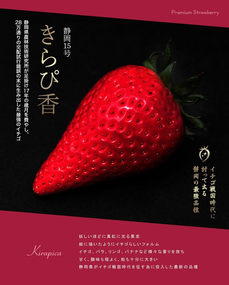 イチゴ戦国時代に討って出る 静岡の最強品種 静岡15号 きらぴ香  静岡県農林技術研究所が足掛け17年の歳月を費やし、28万通りの交配試行錯誤の末に生み出した最強のイチゴ  妖しいほどに真紅に光る果皮 絵に描いたようにイチゴらしいフォルム イチゴ、バラ、リンゴ、バナナなど様々な香りを放ち 甘く、酸味も程よく、粒も十分に大きい 静岡県がイチゴ戦国時代を征す為に投入した最新の品種