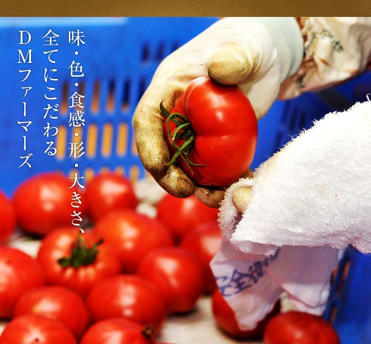 【味・色・食感・形・大きさ、 全てにこだわる DMファーマーズ】狼桃の究極度を担保する仕組みは、実は作り手とトマトの品質管理担当者が違うことにあります。品質(味が一番、食感・色・形・大きさ等)を担当するのは田中さんです。『あんまり、色をうるさく言うから、辞める人が多くて・・・』 田中さん談 収穫時か否かの色の判定は、その日の天候や個人の色覚の差異により差が出るのは当然です。もちろん、人工的な色ではなく、植物が生みだす色ですから、差が出て当たり前と言っても過言ではないです。ただ、DMファーマーズでは収穫のパートの方々にも、細々と指示するので、赤色の呪縛にはまって、辞めていく方も多いそうです。