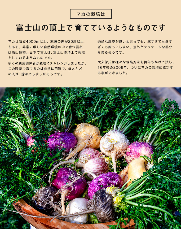 マカの栽培は富士山の頂上で育てているようなものです  マカは海抜4000m以上、寒暖の差が20度以上もある、非常に厳しい自然環境の中で育つ言わば高山植物。日本で言えば、富士山の頂上で栽培をしているようなものです。 多くの農業関係者が栽培にチャレンジしましたが、この環境で育てるのは非常に困難で、ほとんどの人は諦めてしまったそうです。  過酷な環境が良いと言っても、寒すぎても暑すぎても腐ってしまい、意外とデリケートな部分もあるそうです。 大久保さんは様々な栽培方法を何年もかけて試し、15年後の2006年、ついにマカの栽培に成功する事ができました。
