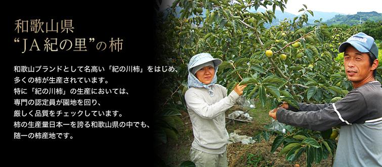"""【和歌山県 """"JA紀の里""""の柿】和歌山ブランドとして名高い「紀の川柿」をはじめ、多くの柿が生産されています。特に「紀の川柿」の生産においては、専門の認定員が園地を回り、厳しく品質をチェックしています。柿の生産量日本一を誇る和歌山県の中でも、随一の柿産地です。"""