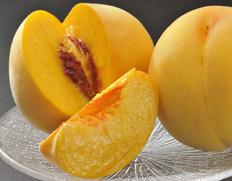 毎年人気、高嶋さんグループの黄桃が間もなく収穫!