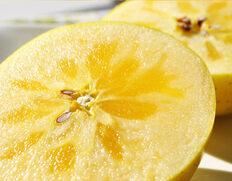 実測糖度15.9度!青森の希少な黄色りんご『こうこう』