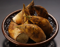 鹿児島県産「早掘り筍」!春の味覚を代表する筍は肉厚でやわらか!