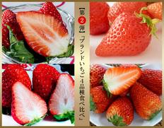 【今が旬】ブランドいちご4品種を贅沢食べ比べ!