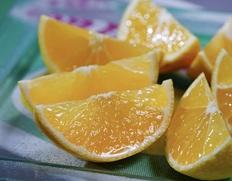 湘南ゴールドでリフレッシュ!1,000品種から選抜した神奈川オリジナル柑橘