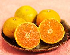 旬の柑橘・みかん
