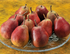 味も香りも違う超レア品種!完熟すると紅色に染まる西洋梨「メープルレッド」